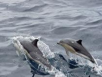 Früh übt sich... by Gesellschaft zur Rettung der Delphine e.V.